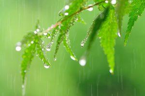梅雨 葉と雨粒