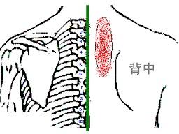 背骨~肩甲骨